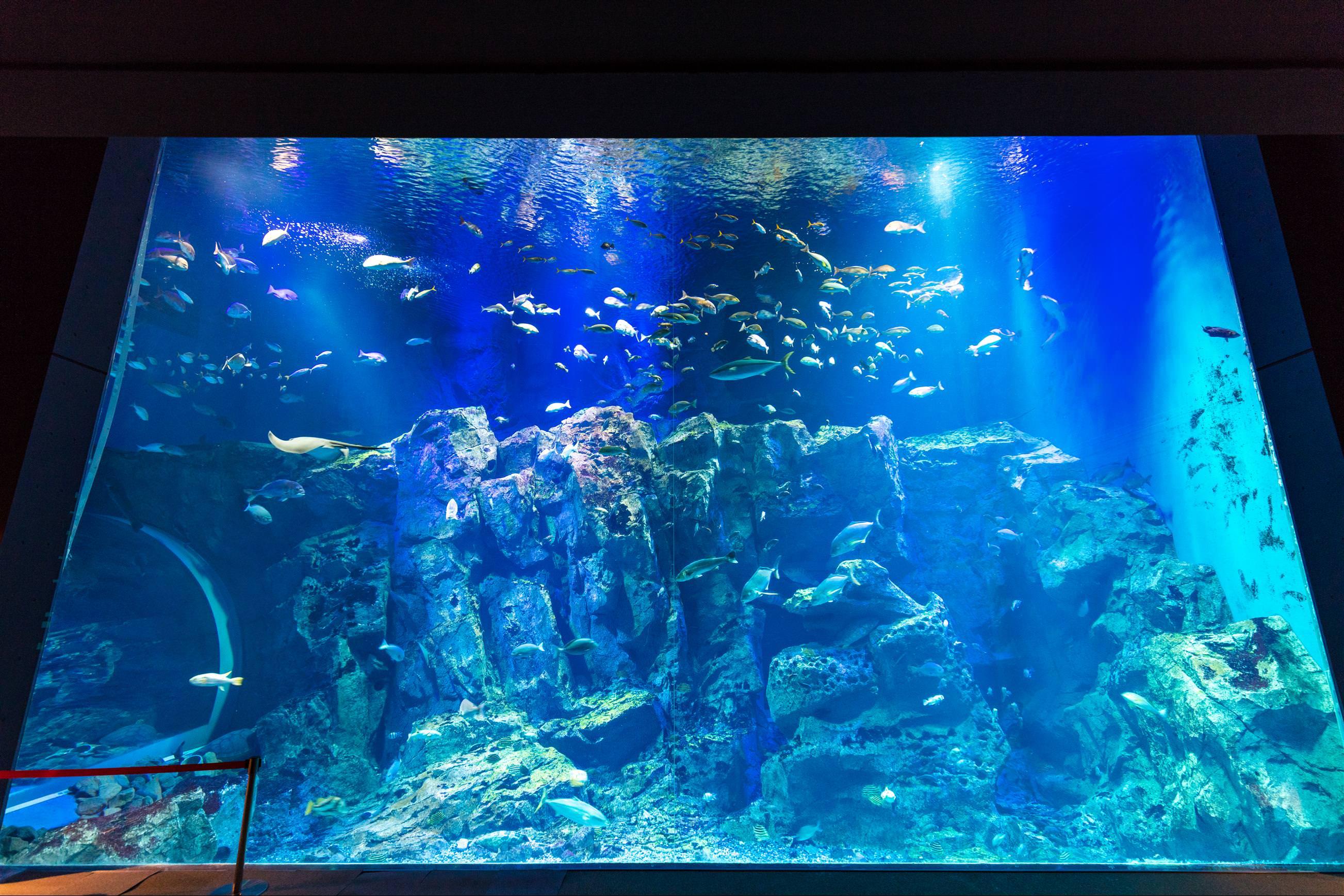 男鹿水族館 GAO