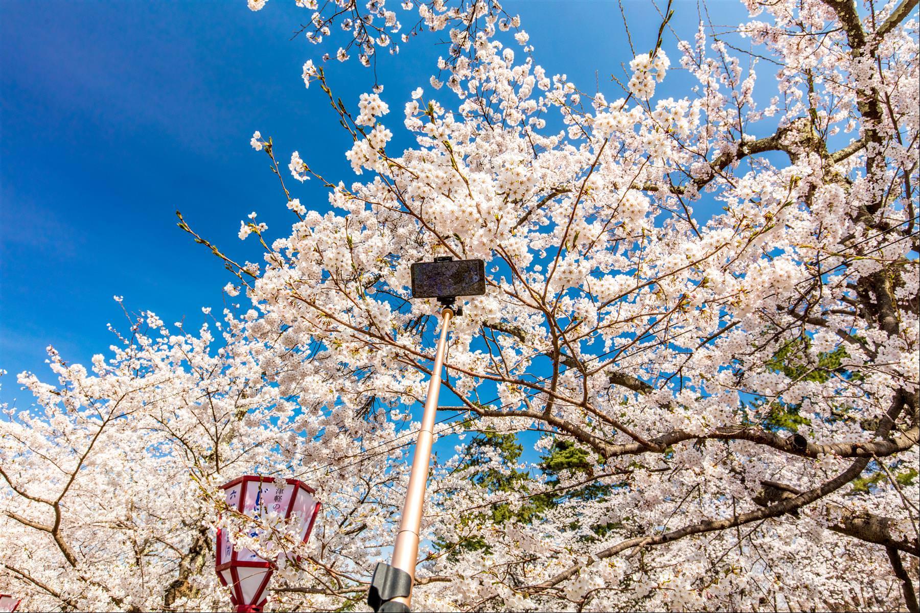 櫻花怎麼拍