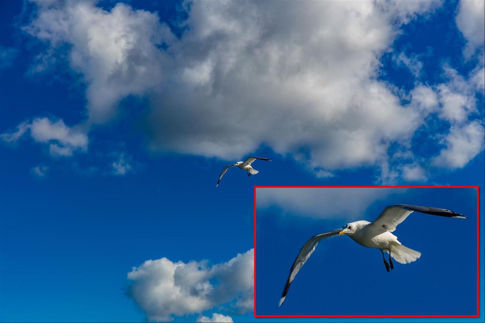 拍鳥對焦設定